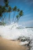 Spiaggia soleggiata con le palme nello Sri Lanka Fotografia Stock Libera da Diritti