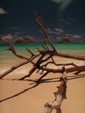 Spiaggia splendida Hawai di Lanikai Immagine Stock Libera da Diritti