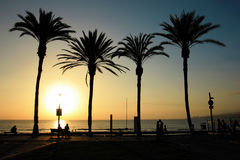 Spiaggia su Tenerife, canarino, Spagna, Europa Fotografia Stock Libera da Diritti