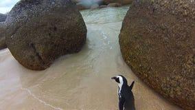Spiaggia Sudafrica di Boulder video d archivio
