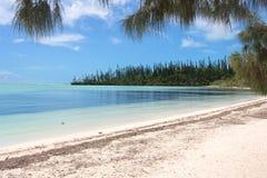 Spiaggia sull'isola dei pini Immagine Stock Libera da Diritti