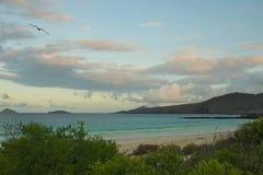 Spiaggia sull'isola di Floreana, isole Galapagos Immagini Stock Libere da Diritti