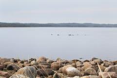 Spiaggia sull'isola di Solovetsky, Russia Immagini Stock Libere da Diritti