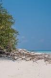 Spiaggia tropicale con la sabbia bianca Immagine Stock Libera da Diritti