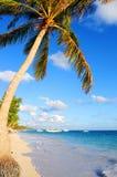 Spiaggia tropicale Immagine Stock Libera da Diritti