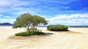 Spiaggia tropicale fotografie stock