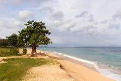 Spiaggia tropicale con l'oceano giallo sabbia e azzurrato e gli alberi verdi immagini stock