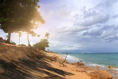 Spiaggia tropicale con l'oceano giallo sabbia e azzurrato e gli alberi verdi fotografia stock libera da diritti