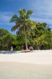 Spiaggia tropicale con la palma Fotografia Stock
