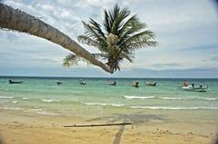 Spiaggia tropicale con la palma Immagine Stock Libera da Diritti