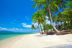Spiaggia tropicale con la palma di noce di cocco immagine stock libera da diritti