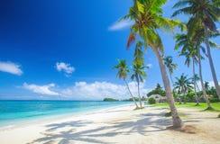 Spiaggia tropicale con la palma di noce di cocco immagine stock