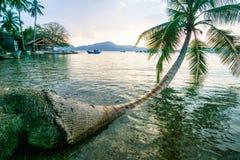 Spiaggia tropicale con la palma di noce di cocco Fotografie Stock Libere da Diritti