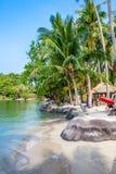 Spiaggia tropicale con la palma di noce di cocco Immagini Stock Libere da Diritti