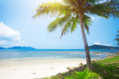 Spiaggia tropicale con la palma di noce di cocco fotografia stock libera da diritti