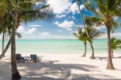 Spiaggia tropicale con le palme Immagine Stock