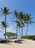 Spiaggia tropicale del ricorso fotografia stock libera da diritti
