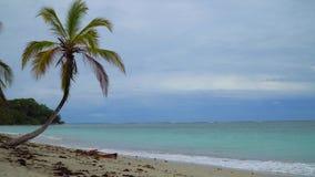 Spiaggia tropicale di paradiso stock footage