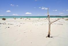Spiaggia tropicale ed albero guasto Fotografie Stock Libere da Diritti