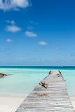 Spiaggia tropicale Maldies Immagine Stock