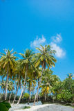 Spiaggia tropicale Maldies Immagine Stock Libera da Diritti