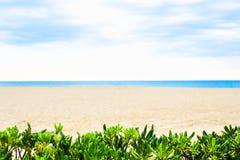 Spiaggia tropicale, mare blu e sabbia nel giorno di estate Lascia le piante verdi su priorità alta Immagini Stock
