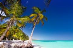 Spiaggia tropicale selvaggia Fotografia Stock