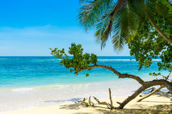 Spiaggia tropicale in Sri Lanka Immagini Stock Libere da Diritti