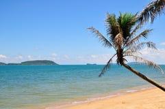 Spiaggia tropicale vuota con le palme Immagine Stock