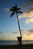 Spiaggia tropicale in Waikiki, Hawai di tramonto Fotografia Stock