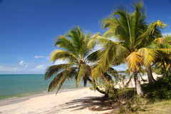 Spiaggia in tropici Fotografia Stock Libera da Diritti