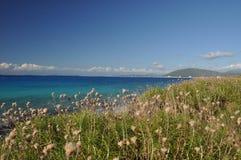 spiaggia verde Fotografia Stock