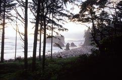 Spiaggia vermiglia, Washington, S.U.A. Fotografia Stock