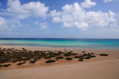 Spiaggia vulcanica dell'Hawai Immagine Stock Libera da Diritti