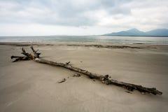 Spiaggia vuota con i tronchi nella sabbia nel Brasile immagini stock