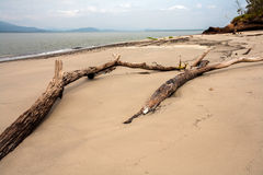 Spiaggia vuota con i tronchi nella sabbia nel Brasile fotografia stock libera da diritti
