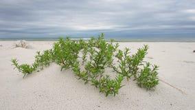 Spiaggia vuota a Pensacola, Florida con erba verde video d archivio