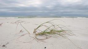 Spiaggia vuota a Pensacola, Florida con erba verde stock footage