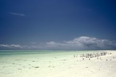 Spiaggia, Zanzibar Immagine Stock Libera da Diritti