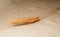 Spica-Weizen auf Sackleinen lizenzfreies stockfoto