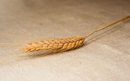 Spica wheat on sackcloth Royalty Free Stock Photo
