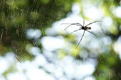 Spicder in web. On green background Stock Photo