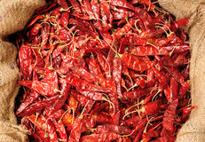 Spice Royalty Free Stock Photography