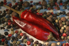 Spice. Peppercorn and cayenne, spices, pepper Royalty Free Stock Photo