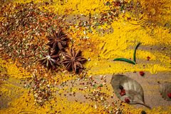 Spice background. seasoning on wooden background. Top view with copy space royalty free stock images