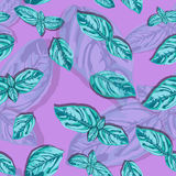 Spice basil leaves seamless pattern on a background. Vector Royalty Free Stock Photos
