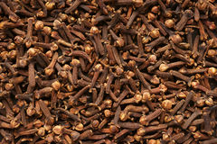 Spice clove. Stock Photos
