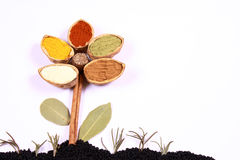 Spice flower on onion seeds ground. Flower created from multiple spices on an onion seeds ground Stock Image