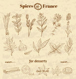 Spice in French cuisine. Herbs used in France for Royalty Free Stock Photos