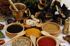 Spice - grain - aroma. Different kind of spices on white - still life stock photo
